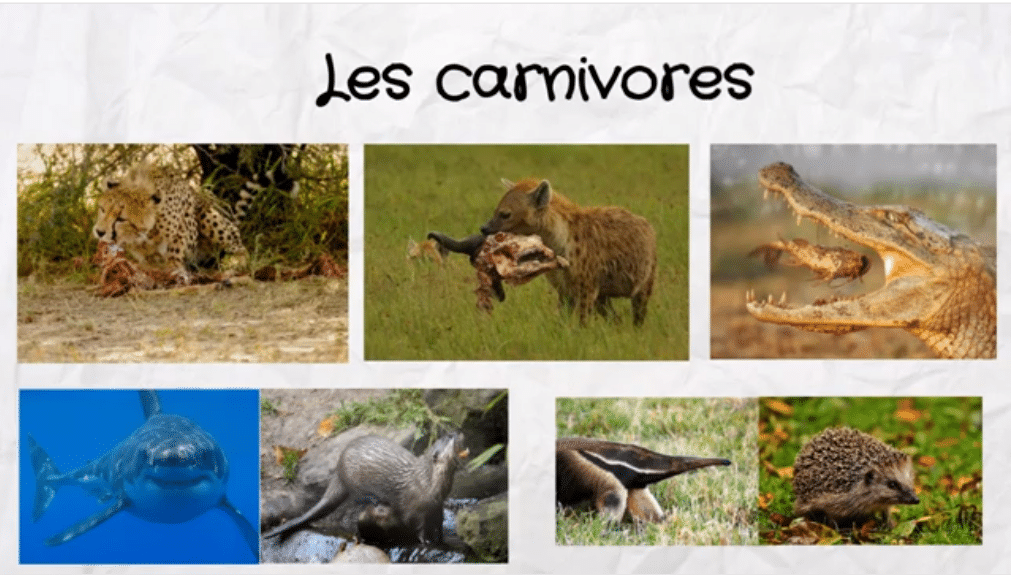 exemples d'animaux carnivores